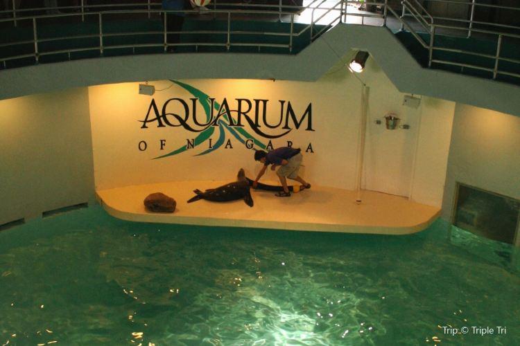 Aquarium of Niagara3