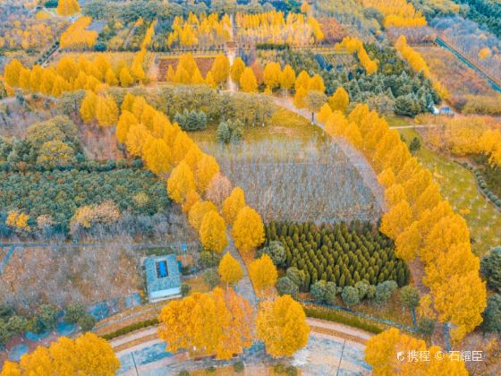 Xingyang Jingxiangcheng Relic Site Ecological Garden