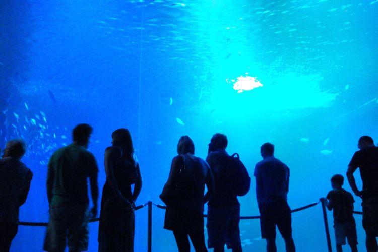 Ozeaneum1