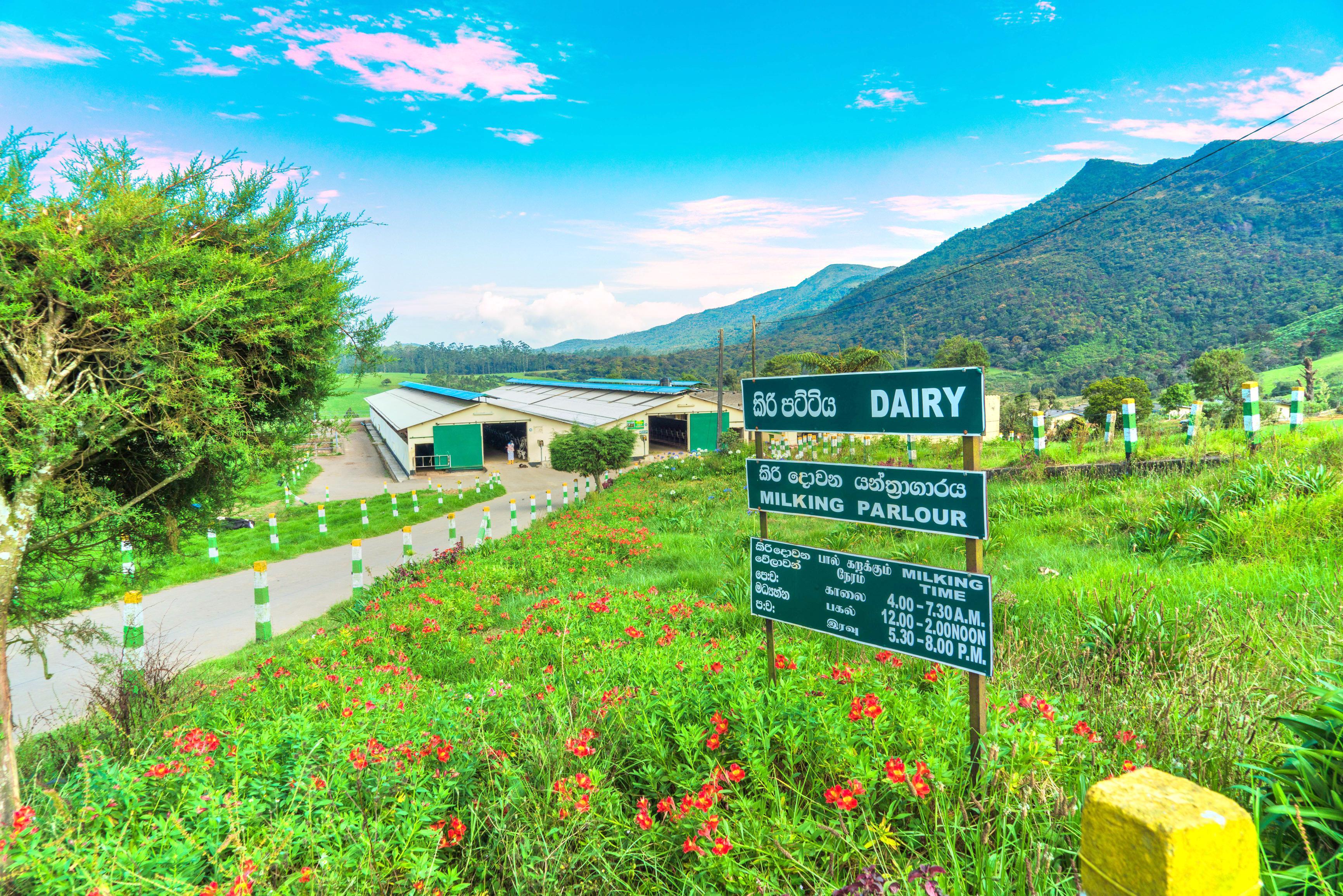 紐西蘭牧場