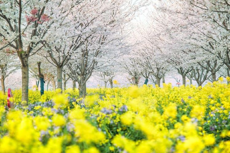 구바이두 초원 꽃밭