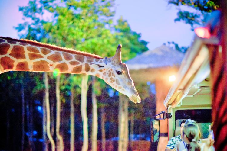 The Chiang Mai Night Safari