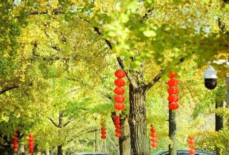 Guyinxing Park