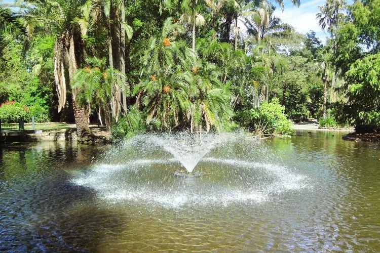 Brisbane Botanic Gardens Mt. Coot-tha