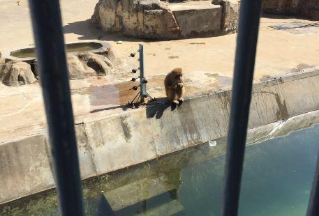 Shangqiushi Renmingong Zoo