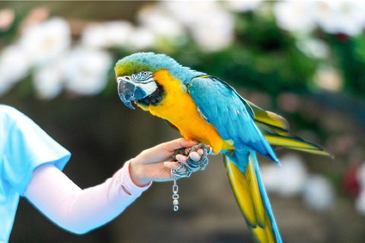東湖海洋樂園飛鳥世界4