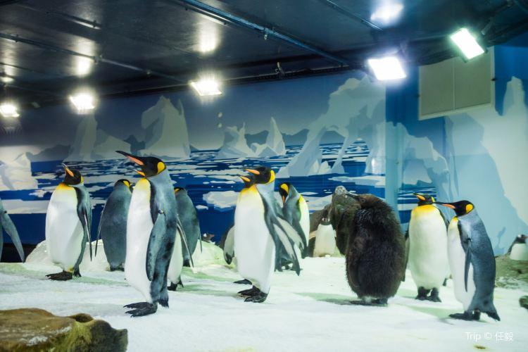 Kelly Tarlton's Antarctic Encounter & Underwater World1