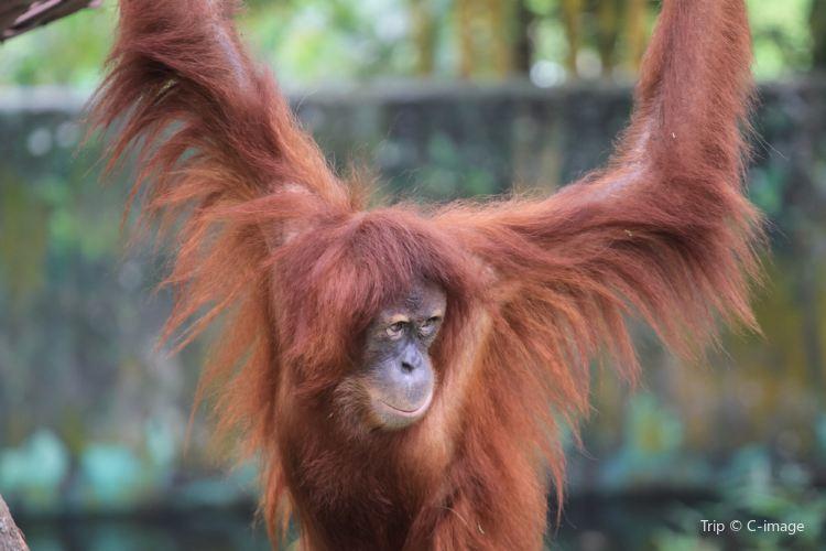 馬來西亞國家動物園2