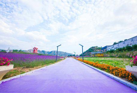Lavender Manor Forever
