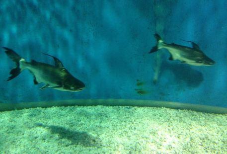 Leda Water Amusement Park