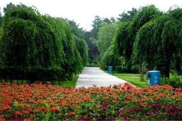 Heilongjiang Forest Botanical Garden3
