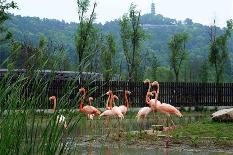 Shangfang Shan Senlin Dongwu World