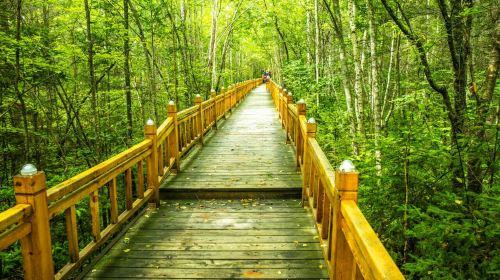 湯旺河石林風景區(湯旺河國家公園)