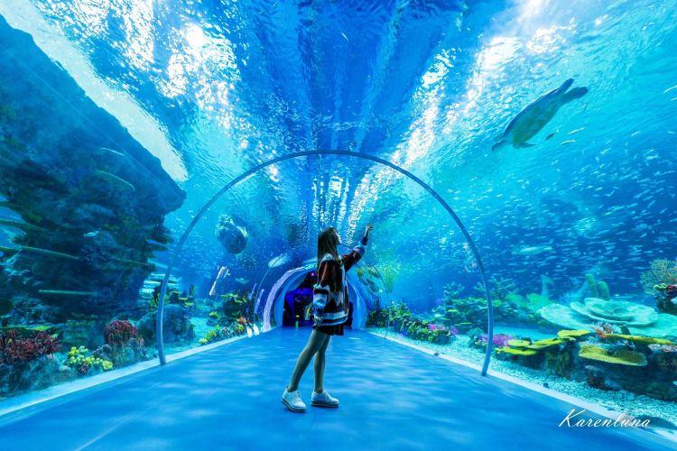 Shanghai Haichang Ocean Park3