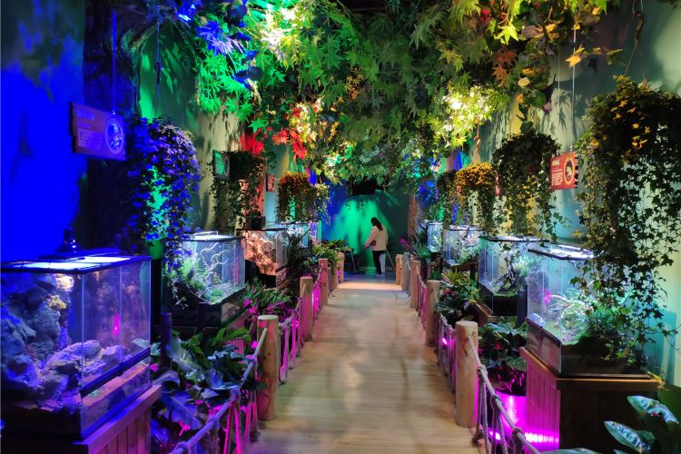 Linyi Mengchong Qinzi Amusement Park3