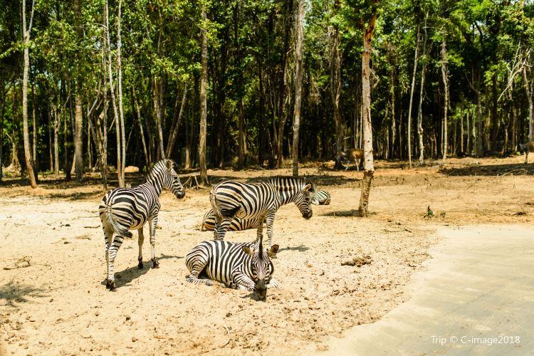 Vinpearl Safari Phu Quoc1
