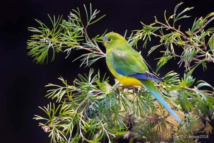 Adelaide Zoo3