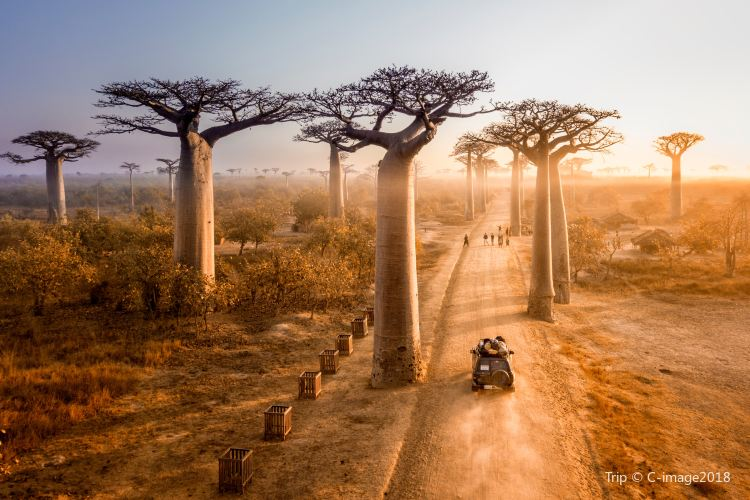 Avenue of the Baobabs3