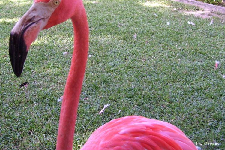 Rand Nature Centre - Bahamas National Trust4