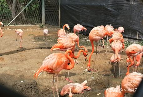 Barranquilla Zoological Garden (JARDIN ZOOLOGICO DE BARRANQUILLA)