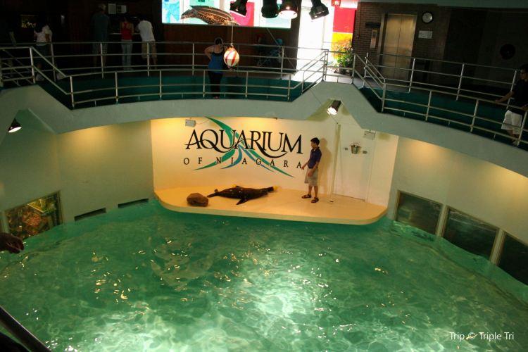 Aquarium of Niagara1