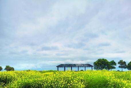 淀山湖風景区