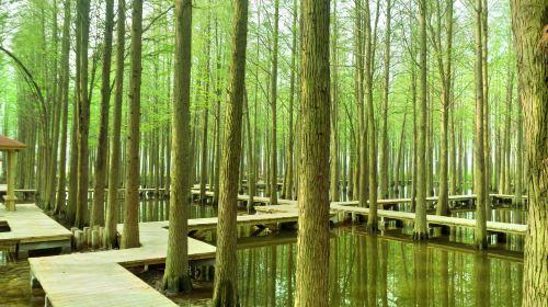 Lizhong Water Forest Park