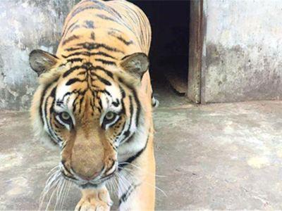 Tian'ehu Zoo
