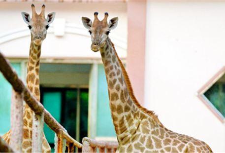 정저우 동물원