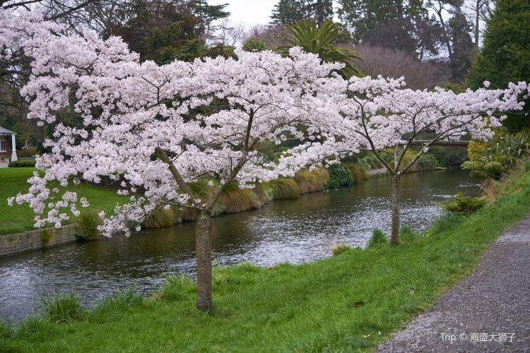Christchurch Botanic Gardens1