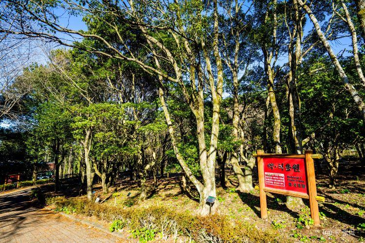 Halla Arboretum2