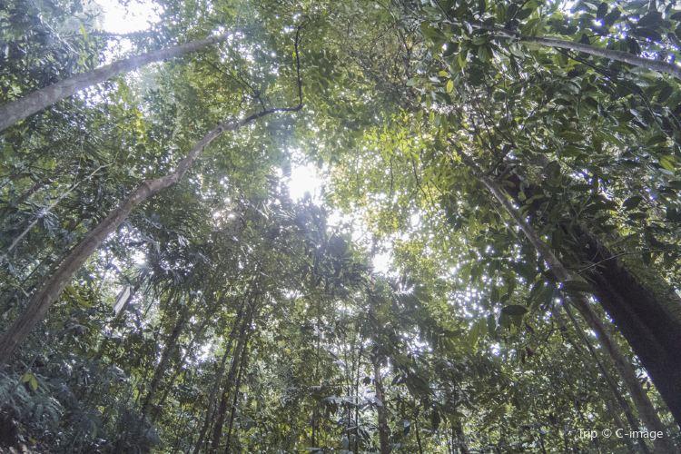 咖啡山森林保護區2