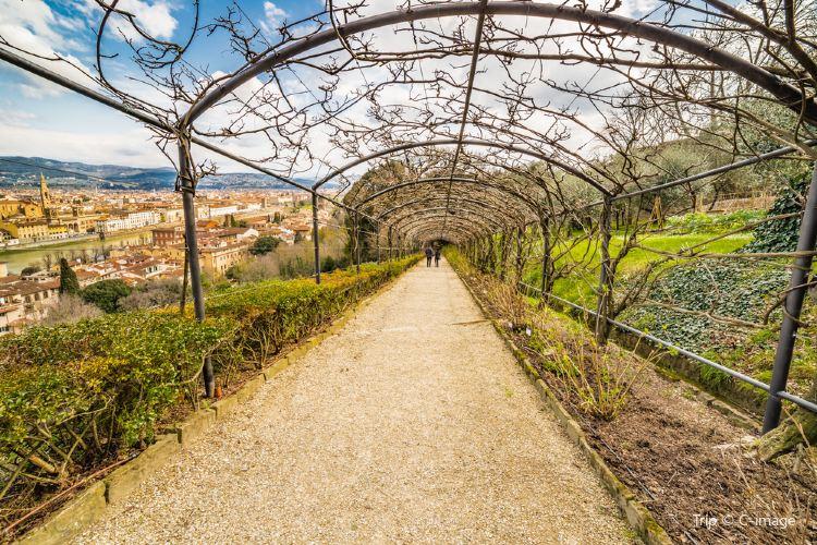 Bardini Garden2