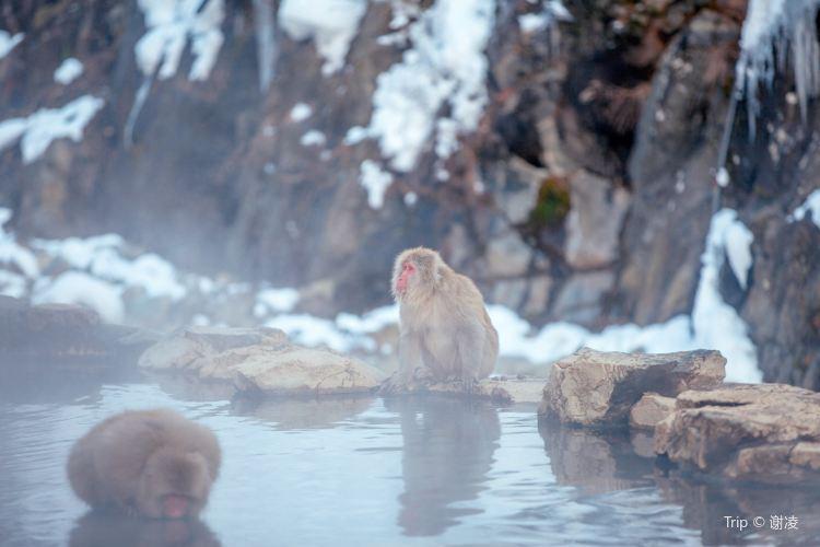 地獄谷野猿公苑4