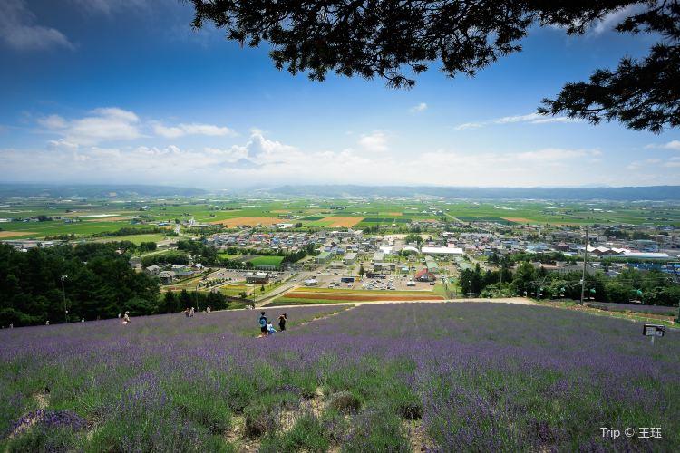 Choei Lavender Park1