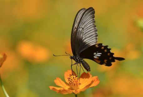 Butterfly Valley City Garden