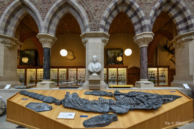 Oxford University Museum of Natural History3