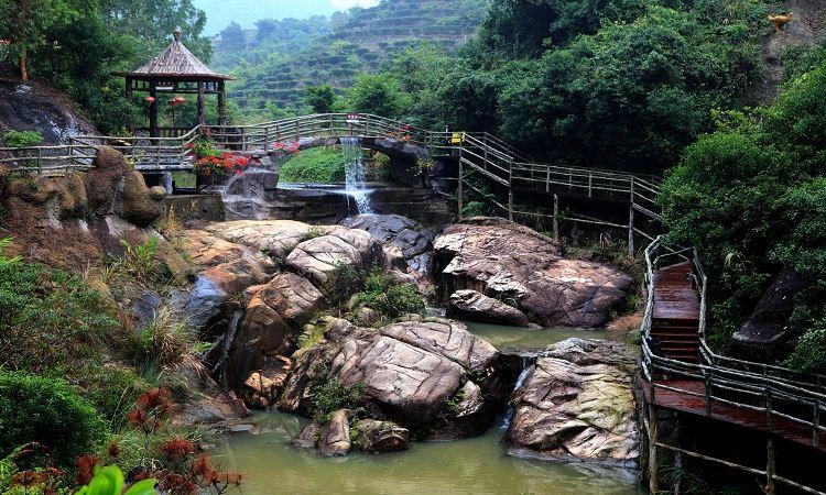 Purple Lotus Forest Resort1