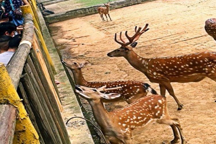 九峰森林動物園2