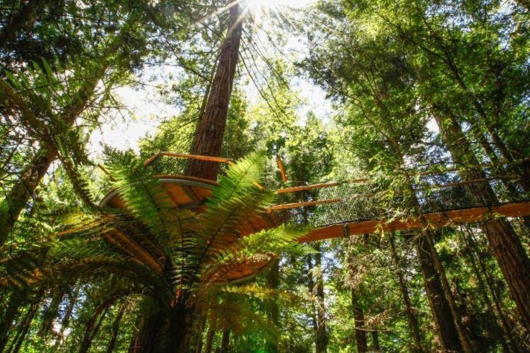紅木森林公園3