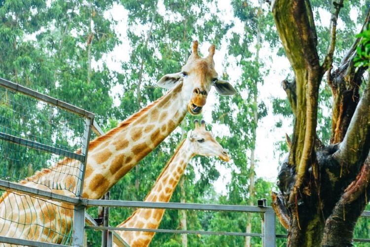 Xiangshi Zoo3