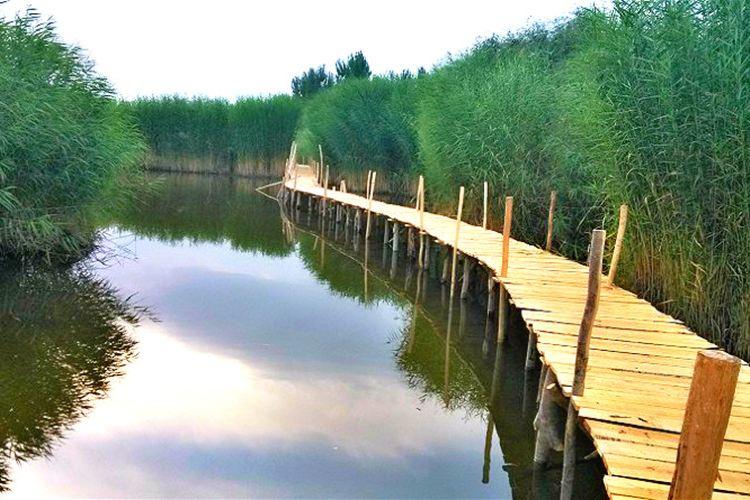 香妃湖花卉莊園2