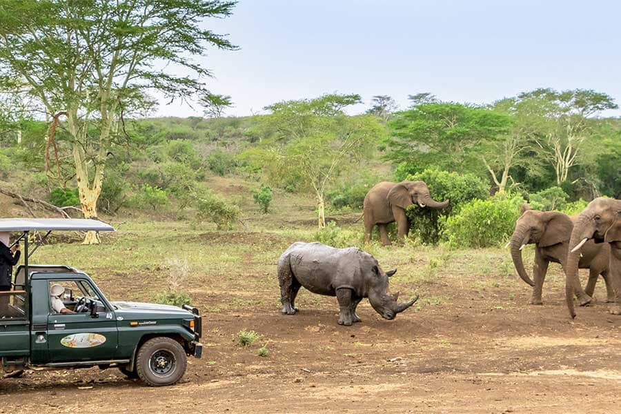 Zulu Safaris