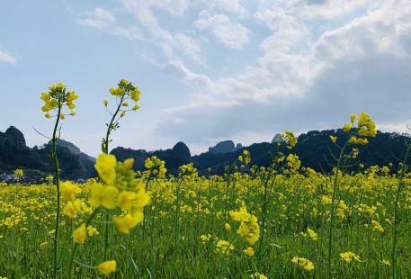 Langshan Rape flower