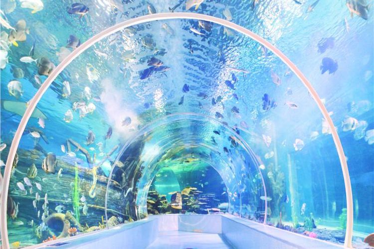 Linyi Ocean World Theme Park1