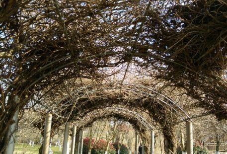Suhang Botanical Garden