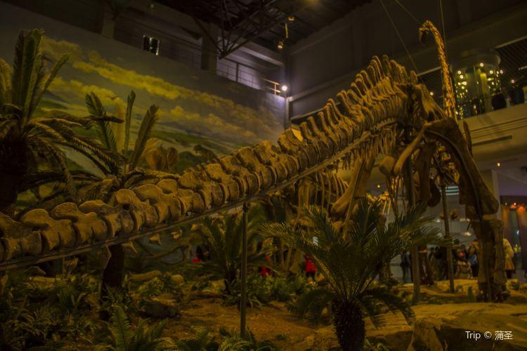 쯔궁 공룡 박물관1