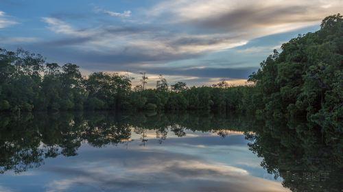 Semporna Mangrove