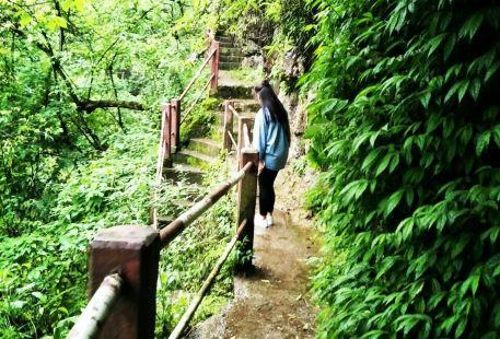 Sajin Valley Scenic Area