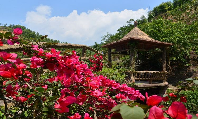 Purple Lotus Forest Resort4